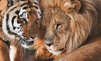 Guided Tour Tickets at Conservators Center (Up to 41% Off). Four Options Available.