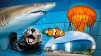Aquarium of the Pacific: Weekday After-3pm Admission