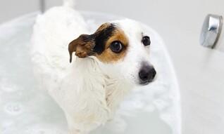 Deal for Grateful Pups Pet Salon