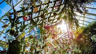 Deal for The New York Botanical Garden