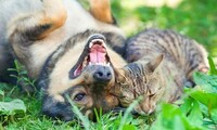 $149 for a Complete Pet Dental Package at Paradise Pet Hospital ($399 Value)