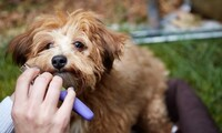 V.I.P. Haircut or Dog Bath at Pawsitively Groomed Pet Salon (Up to 45% Off)