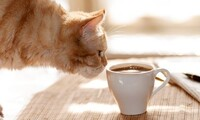 Two-Hour Admission with Add-Ons for One, Two, or Four at Kzoo Cat Cafe (Up to 50% Off). Six Options Available.