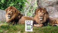 """Brew at the Zoo"" -- Wildlife & Craft Beer at Franklin Park Zoo"