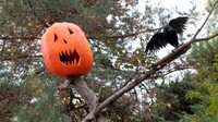 """NYBG's """"Spooky Pumpkin Nights"""" Party"""