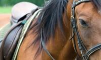 $99 for $180 Worth of Horseback Riding — Tri-Platinum Training